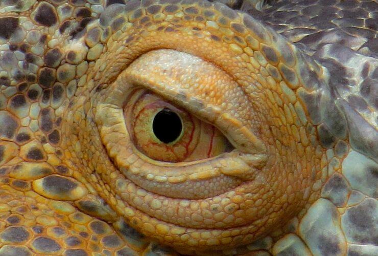 Best lizard pets