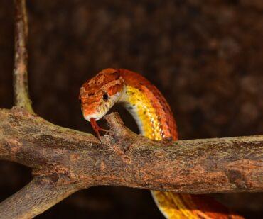 Best snake pets