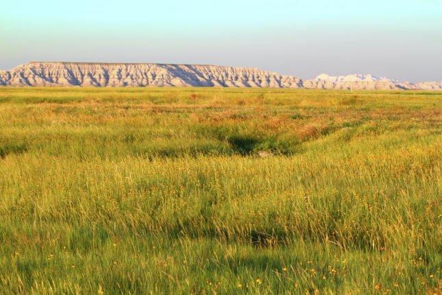 grasslands biome